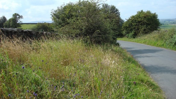 Example of a species rich verge in the North York Moors - copyright NYMNPA