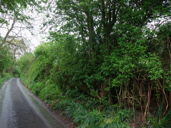 Old roadside hedge, Bilsdale - copyright Ami Walker, NYMNPA.