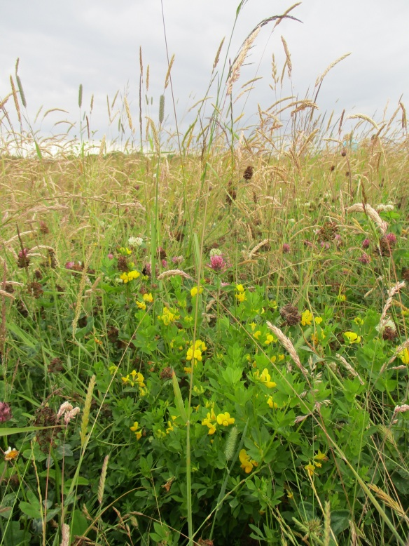 CFE Farm Walk - a pollinator meadow on the farm we visited full of red and white clover and meadow vetchling. Copyright NYMNPA.