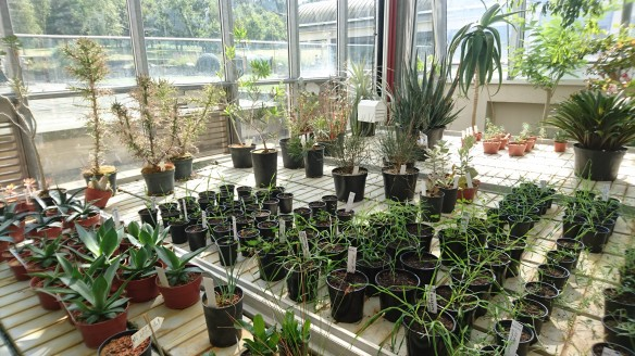 Millennium Seed Bank - growing seeds on in greenhouse - Sam Witham, NYMNPA.