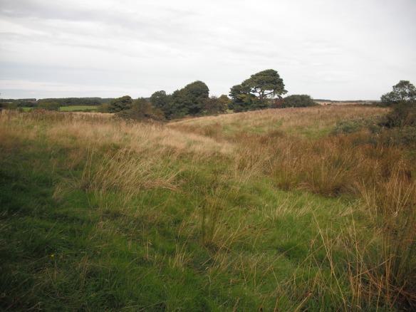 Rush pasture in the North York Moors - copyright John Beech, NYMNPA.