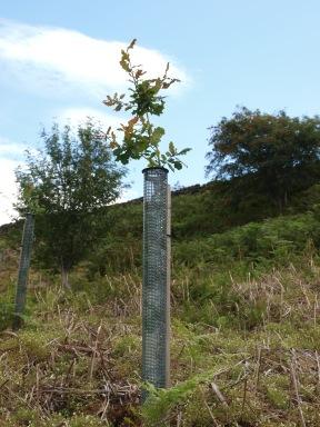 Tree planting in Baysdale - copyright NYMNPA
