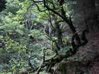 Baysdale trees - copyright NYMNPA