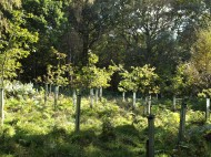 New planting to regenerate Birch Wood, Bilsdale - copyright NYMNPA