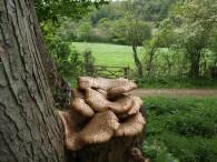 Tree fungi - copyright NYMNPA