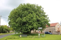 Cropton village tree - copyright NYMNPA