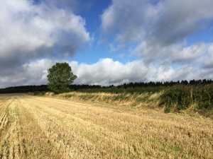Edge of arable field. Copyright NYMNPA.