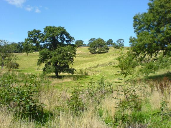 Tree'd landscape, Low Newbiggin - copyright NYMNPA