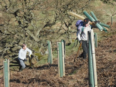 Tree planting on Levisham Estate - copyright NYMNPA