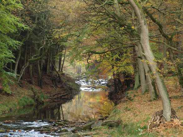 Riparian woodland in autumn, near Hawnby - copyright Paul Harris, NYMNPA