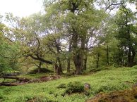 Upland woodland at Tarn Hole, Tripsdale - copyright NYMNPA