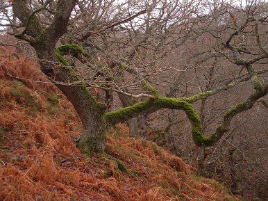 Hillside woodland in autumn - copyright Paul Harris, NYMNPA