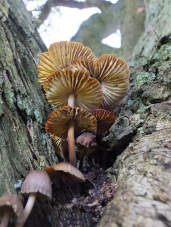 Fungi in and around the North York Moors - unidentified tree fungi - copyright NYMNPA.