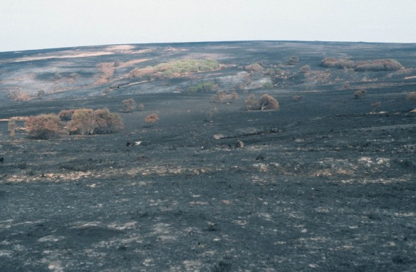 Fylingdales Moor after teh wildfire in 2003. Copyright - NYMNPA.