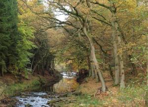 River Rye near Hawnby. Copyright NYMNPA.