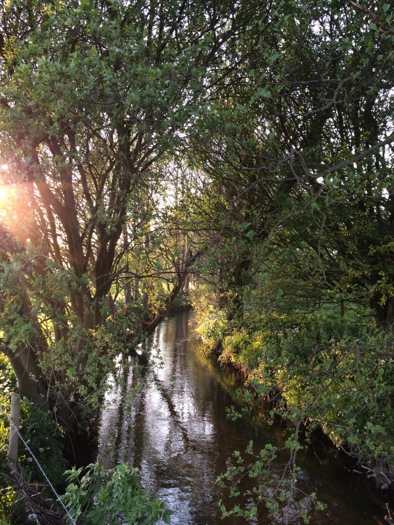 River Riccal, Rye tributary. Copyright Rosy Eaton, Natural England.