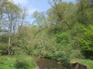 River Rye - riparian woodland habitat. Copyright NYMNPA.