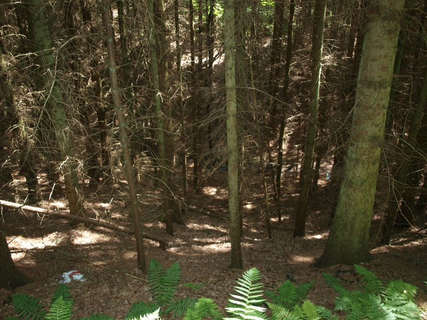 Example of PAWS (Plantation on Ancient Woodland Sites) with bare slopes. Copyright NYMNPA.