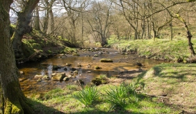 River Rye at Low Locker in Snilesworth, close to the source of the Rye. Copyright Liz Bassindale, Howardian Hills AONB.