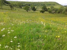Wildflower meadow in the Hole of Horcum. Copyright NYMNPA.