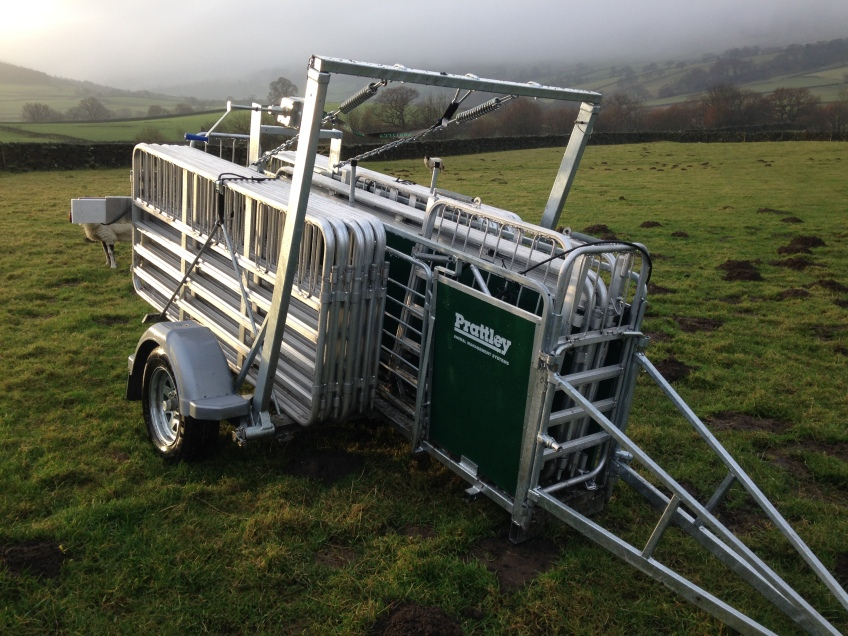 Mobile sheep handling facilities.