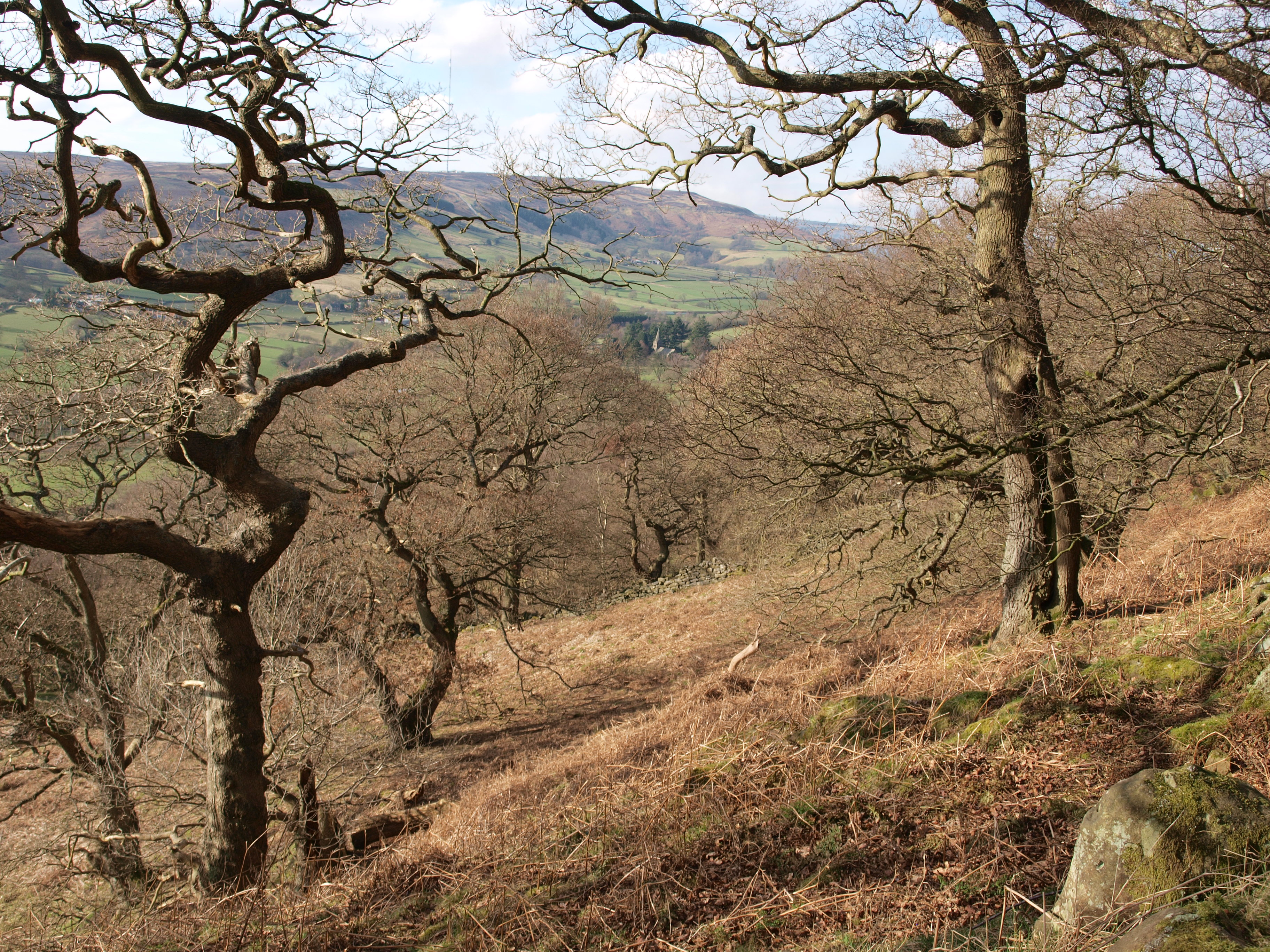 woodland the official blog for the north york moors national park existing area of ancient woodland in bilsdale copyright nymnpa