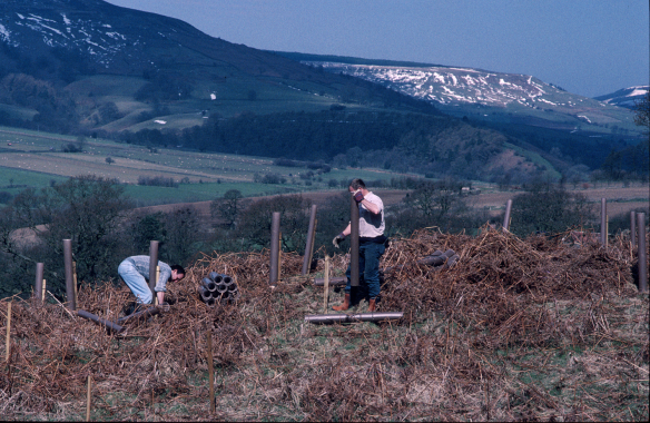 Contractors planting new woodland alongside the existing Ancient Woodland, back in 2001. Copyright NYMNPA.