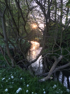 River Riccal at sunset - copyright Rosy Eaton, Natural England.