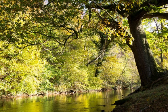 River Rye and riparian woodland. Copyright NYMNPA.
