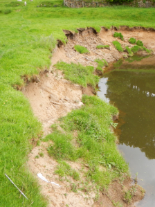 River Esk, sharp bend site - before (June 2013). Copyright Wild Trout Trust.