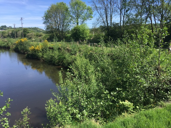 River Esk, sharp bend site - now (July 2017). Copyright NYMNPA.