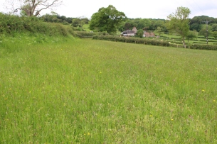 Land Management Agreement - species rich grassland creation, Egton Grange. Copyright TELoI.