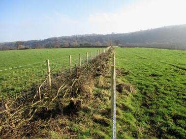 Land Management Agreement - hedge laying, Glaisdale. Copyright TELoI.