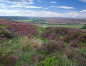 Gallows Dyke, Levisham Moor. Copyright NYMNPA.