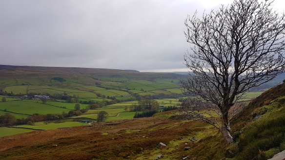 Rosedale landscape. Copyright Tom Mutton, NYMNPA.