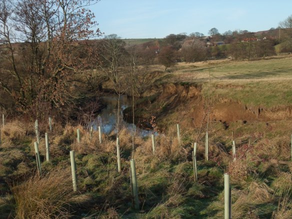 Small scale riparian woodland planting. Copyright NYMNPA.