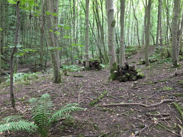 Ingleby Plantation - dead wood placed in piles after selective felling. Copyright NYMNPA.