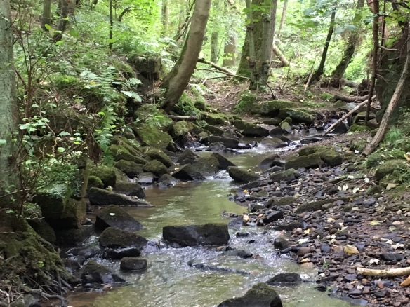 Ingleby Plantation - stream that ran through the site, with stones from old retaining wall. Copyright NYMNPA.