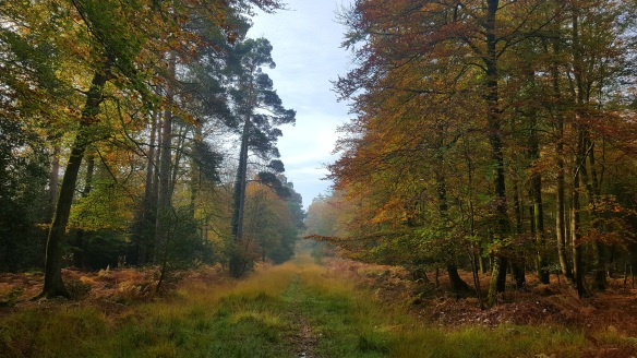 Shave Wood Inclosure, New Forest. Copyright Julie Melin-Stubbs, New Forest National Park Authority.