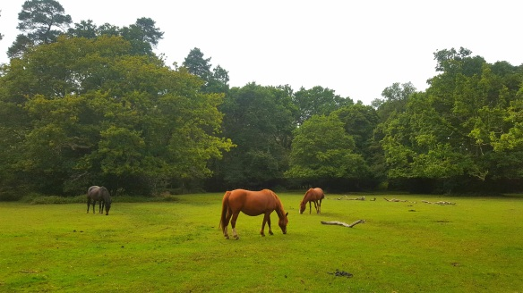 View of the New Forest landscape. Copyright Julie Melin-Stubbs, New Forest National Park Authority.