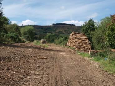 Felled timber, below Trennet Bank Plantation (on horizon). Copyright NYMNPA.