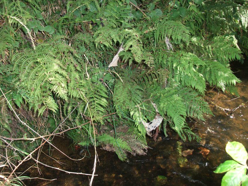 Example of sewage litter. Copyright NYMNPA.