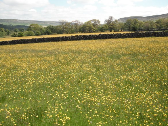 Grassland with buttercups. Copyright NYMNPA.
