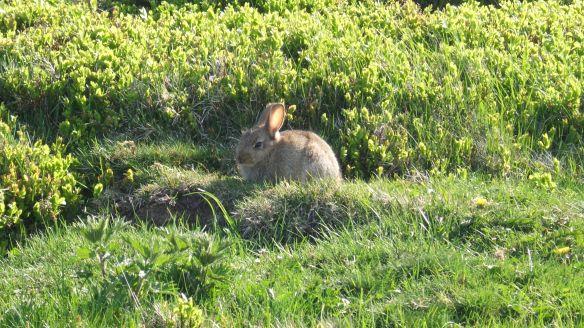 Rabbit, Westerdale. Copyright Ami Hudson, NYMNPA.