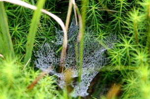 Close up of cobweb, Levisham Estate - copyright Alasdair Fagan, NYMNPA
