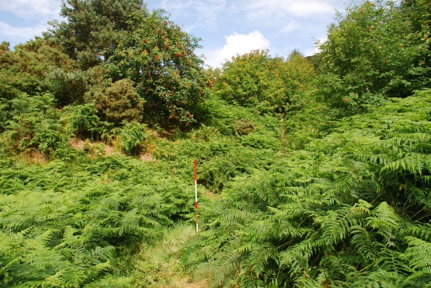 Ayton Alum works covered in bracken - copyright NYMNPA.