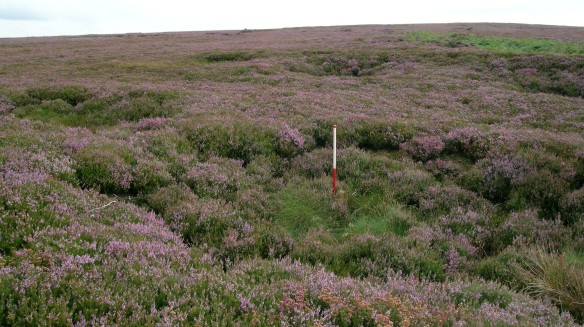 SEPA on Middle Rigg, Easington High Moor - the ranging rod is in one of the pits. Copyright NYMNPA.