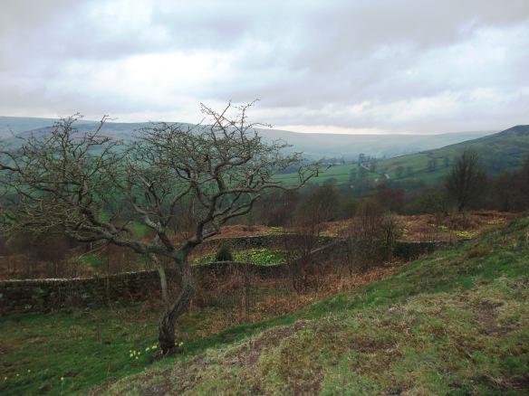 Farndale looking towards Oak Crag. Copyright NYMNPA.