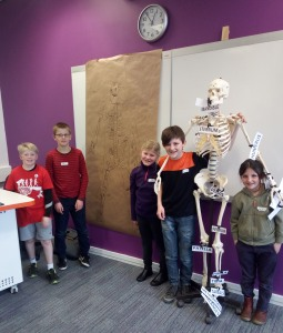 Moors & Valleys YAC - Teesside human skeleton session. Copyright NYMNPA.
