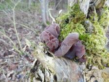 Unidentified fungi. Copyright NYMNPA.